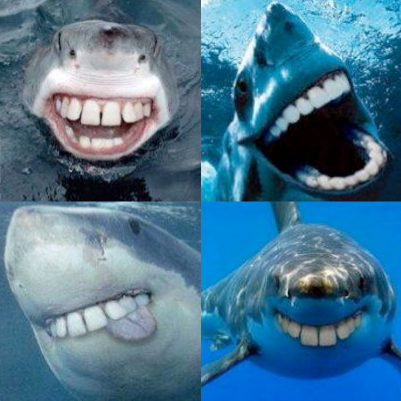 Sharks without sharp teeth - Tysons Corner Dentist � Cosmetic ...