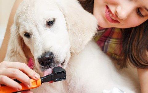 pet oral health