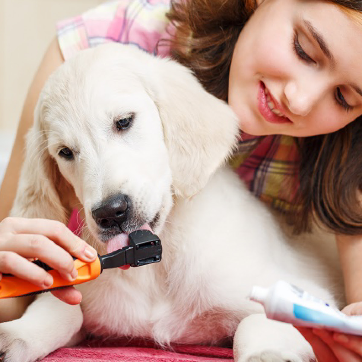 February is Pet Dental Health Month! - Dentist Tysons ...